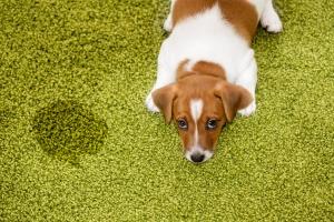Brudny dywan? Pranie dywanów, tapicerki meblowej i samochodowej - Otwock Karczew Józefów   Usuwanie nieprzyjemnych zapachów